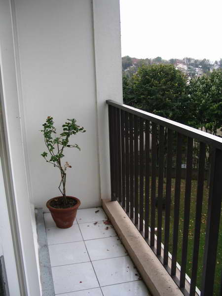 Tenoch cactus for Amenagement petit balcon